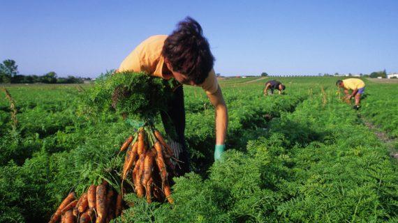 Menteri Agraria: Agar Wakaf Produktif, Ikrar Wakaf Harus Diubah